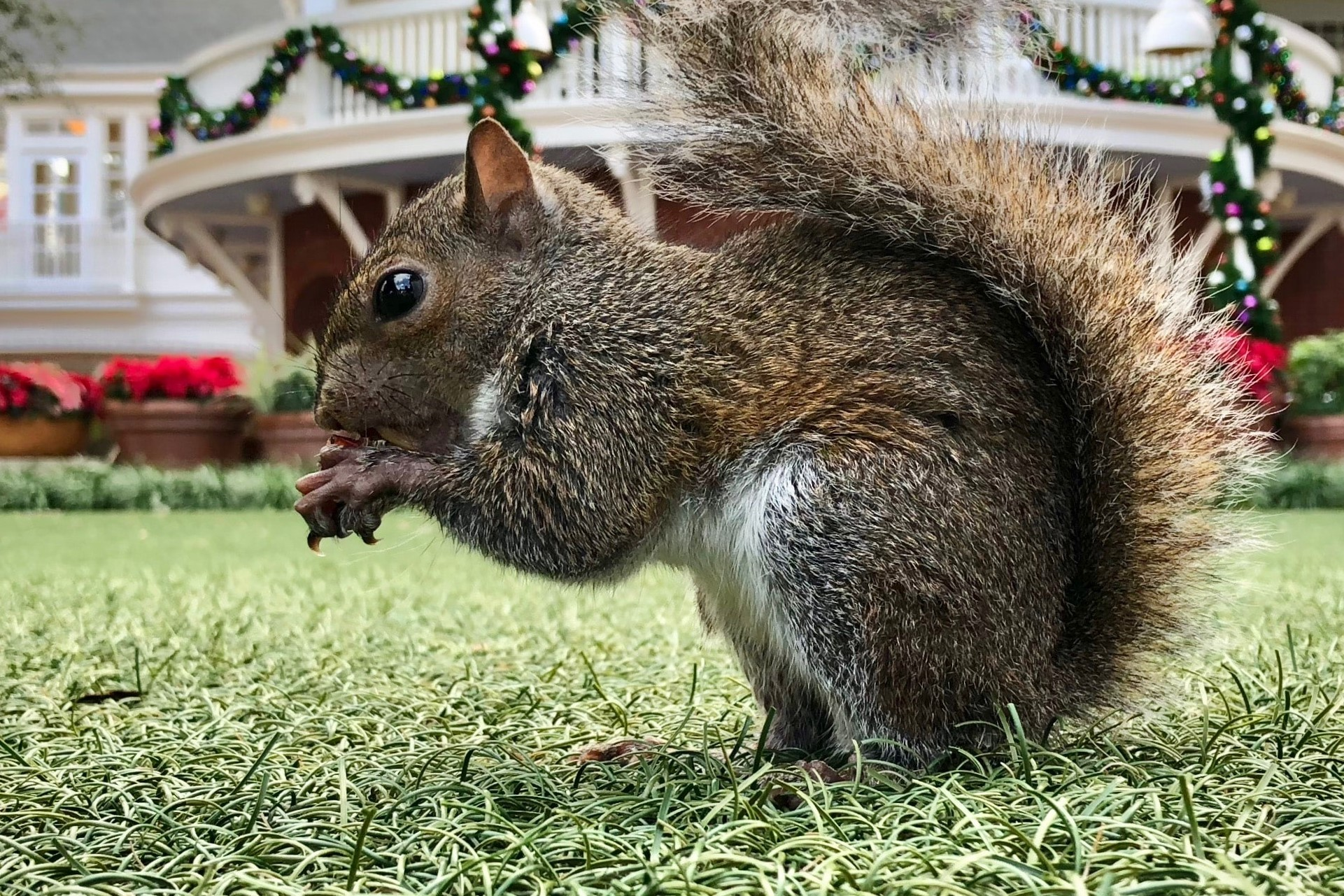 squirrel-in-house